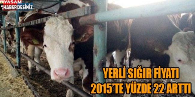 Yerli sığır fiyatı 2015'te yüzde 22 arttı