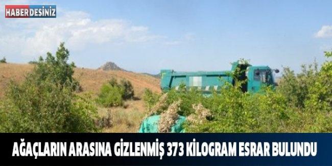 Ağaçların Arasına Gizlenmiş 373 Kilogram Esrar Bulundu