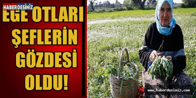 EGE OTLARI ŞEFLERİN GÖZDESİ OLDU!