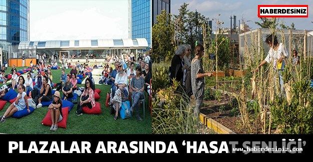Plazalar arasında 'Hasat Şenliği'