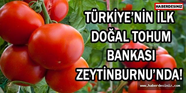 TÜRKİYE'NİN İLK DOĞAL TOHUM BANKASI ZEYTİNBURNU'NDA!