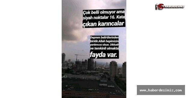 İstanbul depremine ilişkin ilginç iddia! 'Yüksek kata çıkan karıncalar' depremin habercisiydi.
