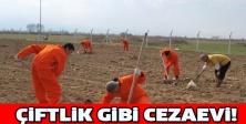 Çiftlik gibi cezaevi!