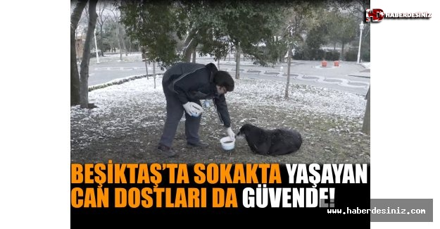 Beşiktaş'ta Sokakta Yaşayan Can Dostları Da Güvende!
