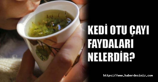 Kedi otu çayı faydaları nelerdir?