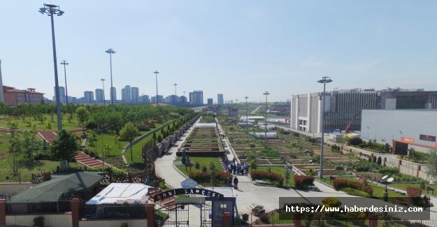 Şehrin ortasına organik tarım