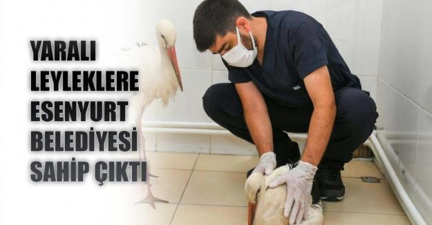 Yaralı leyleklere esenyurt belediyesi sahip çıktı