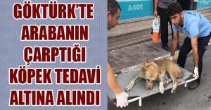Göktürk'te Arabanın çarptığı köpek tedavi altına alındı