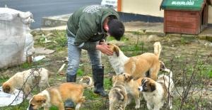 Esenyurt belediyesi hayvan dostlarını unutmuyor